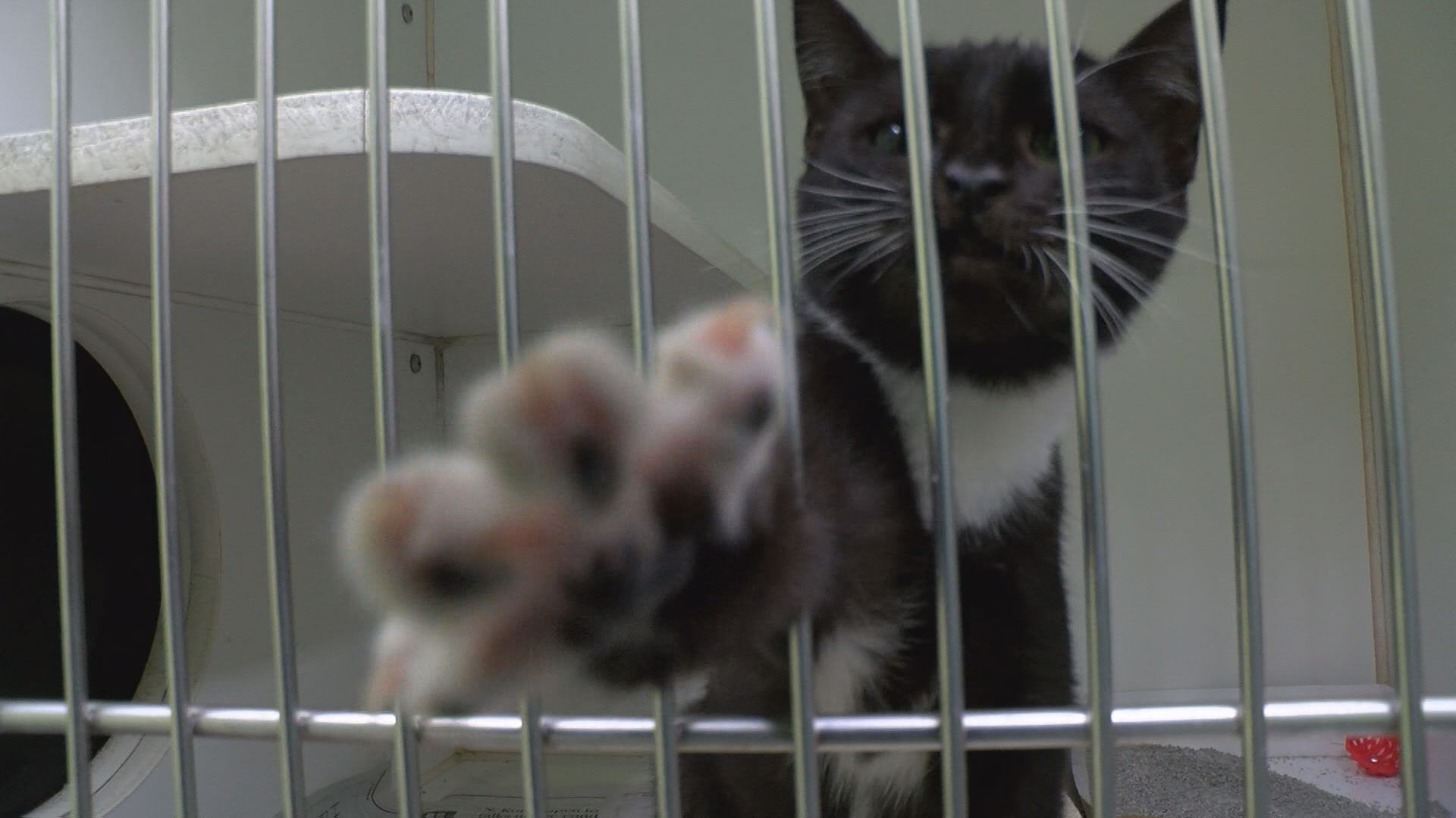 cats_468139