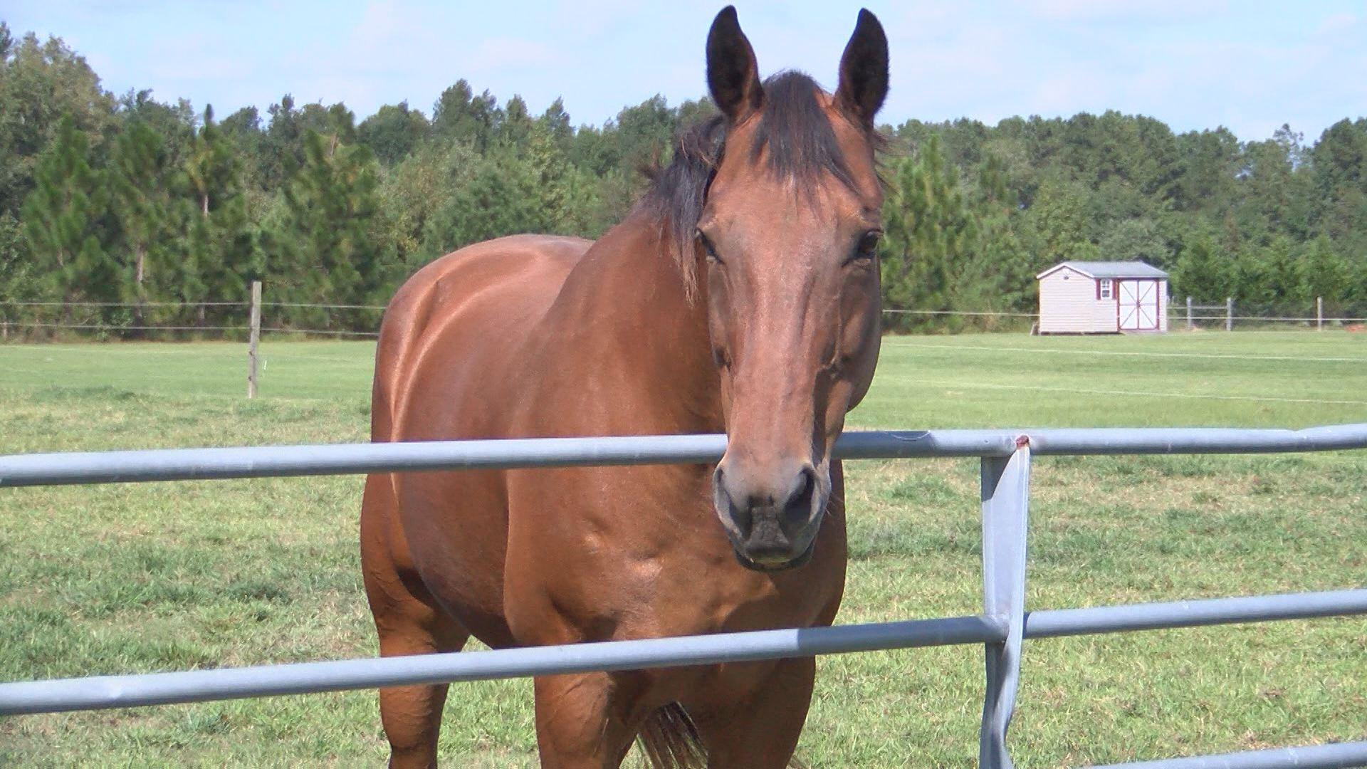 HORSE_474642
