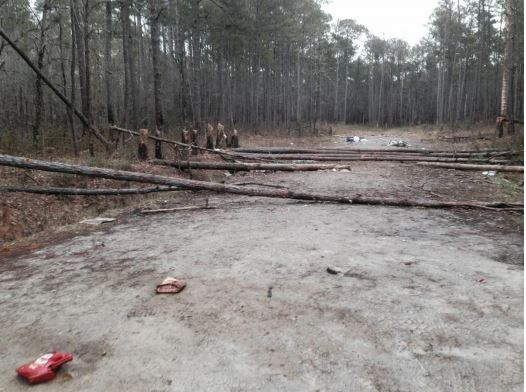Croatan Forest Service temporarily halts target shooting._29427