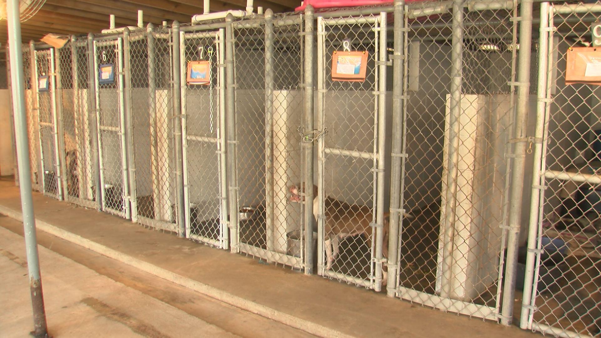 bertie county animal shelter_1522660772735.jpg.jpg