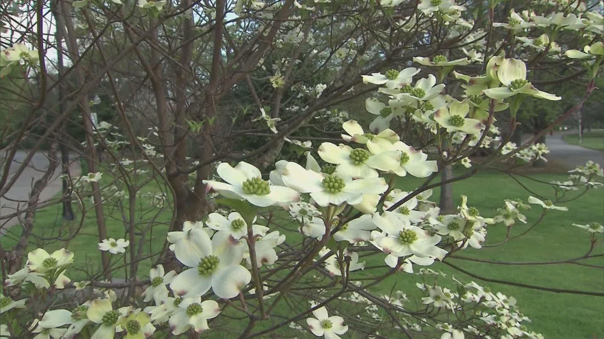 pollen_396498