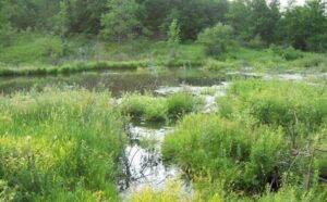 Chautauqua Watershed Conservancy's East Branch Chautauqua Creek Preserve. Photo Credit: Chautauqua Watershed Conservancy
