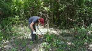 WNY PRISM Crew removing common buckthorn at Tifft Nature Preserve, as part of the vernal pool restoration project. Photo Credit: WNY PRISM