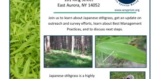 Japanese Stiltgrass Update