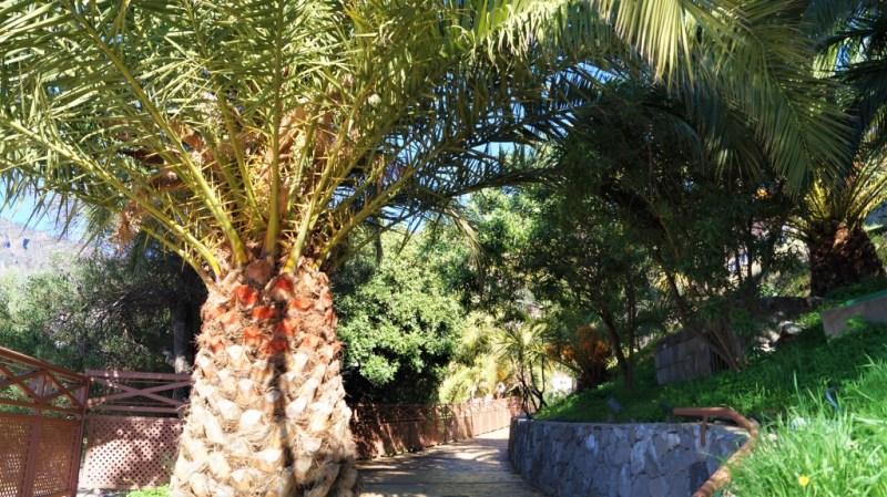 Der Weg zum Centro de Plantas Medicinales de Tejeda