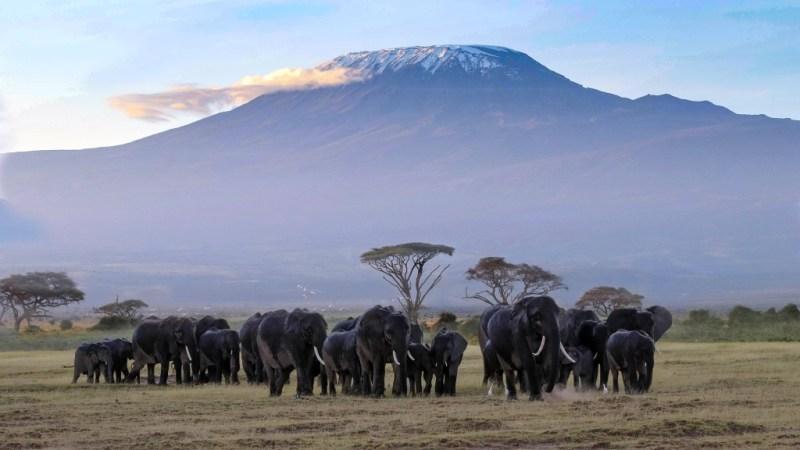 Kilimandscharo in Kenia
