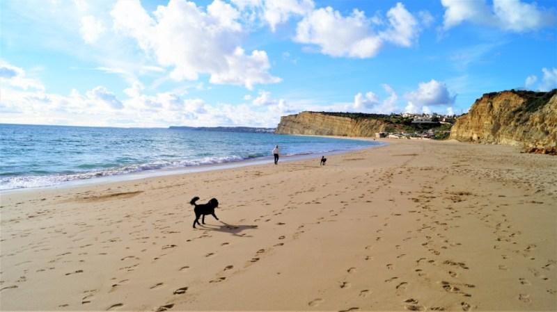 Hund am Strand Praia de Porto de Mos