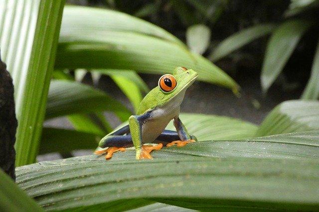 bunte Tierwelt in Lateinamerika