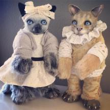 Commisseioned Cats Doll Pair