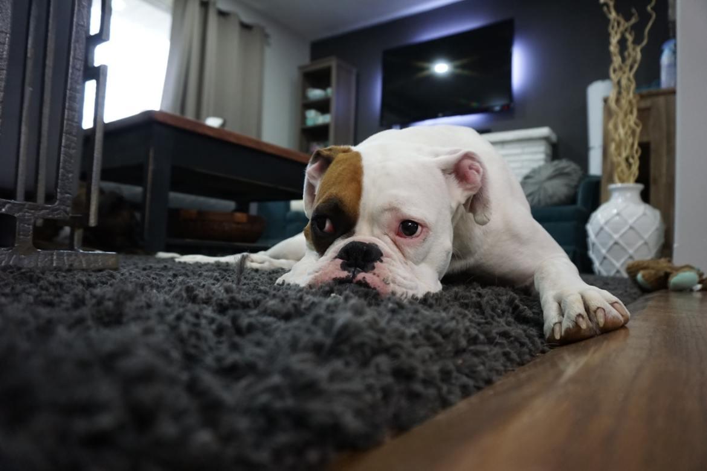 Auf Wolldecken fühlen sich Hunde wohl