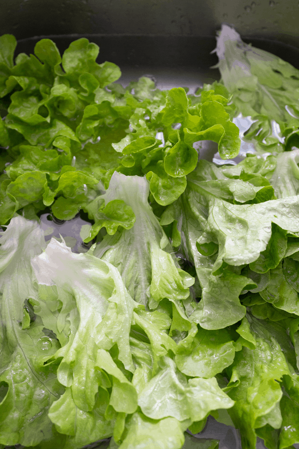 Separated lettuce leaves being washed in a sink of water