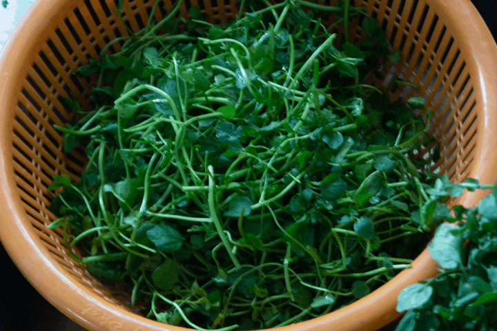 Watercress in a colander.