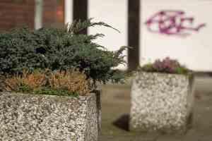 Blumenkübel gegenüber dem Drostenhof. fga