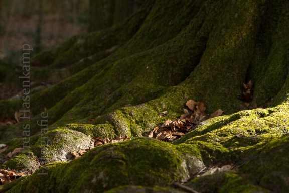 Natur im Tiergarten Wolbeck.
