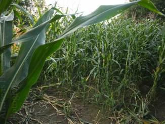 Weiterbildung: Angebote für die Landwirtschaft