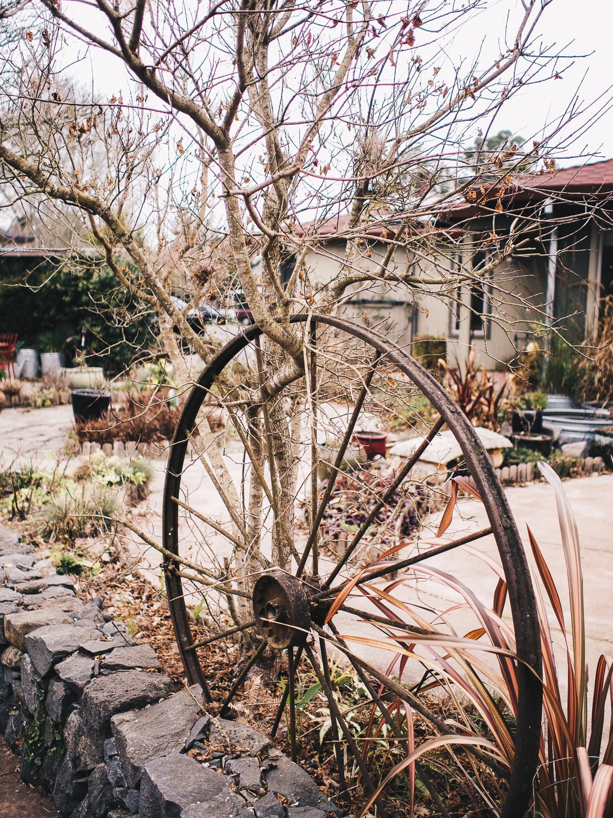 One Night in Wine Country   Our Garden AirBNB in Graton   Wolf & Stag Adventures