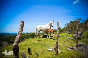 Baby horse!!