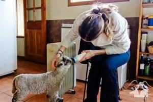 Feeding the lambs at Camping Torres del Simpson