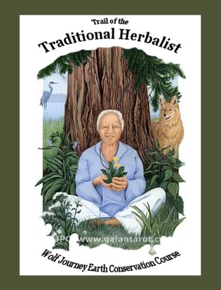 Book Cover for Trail of the Traditional Herbalist