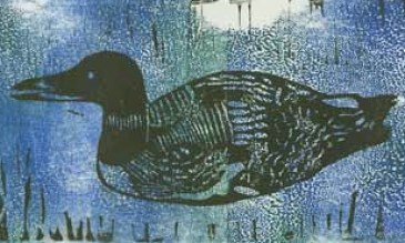 Original lithograph of Common Loon by the author, Chris Chisholm 1998