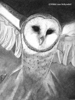 Barn Owl B/W Sketch by Nikki van Schyndel