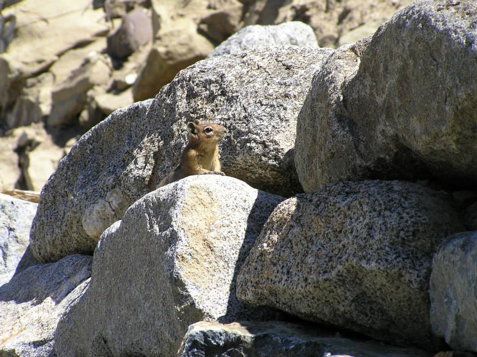 Anxious Ground Squirrel