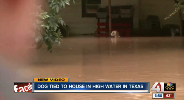Dog Tied To House Flood