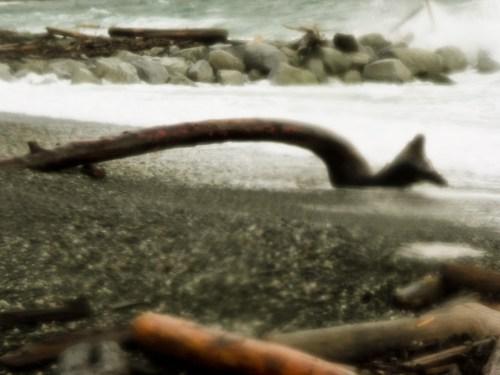 Ross Bay Driftwood