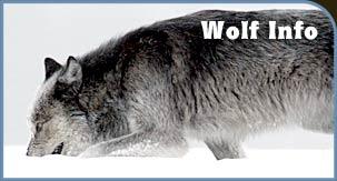Wolf Info