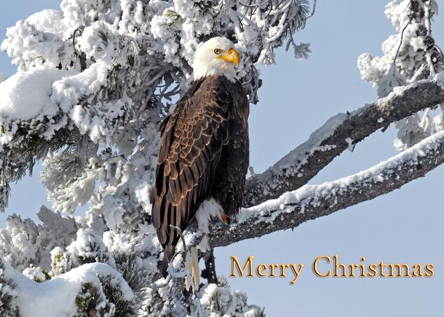 Christmas Cards Wolfs Vision Nature Photography