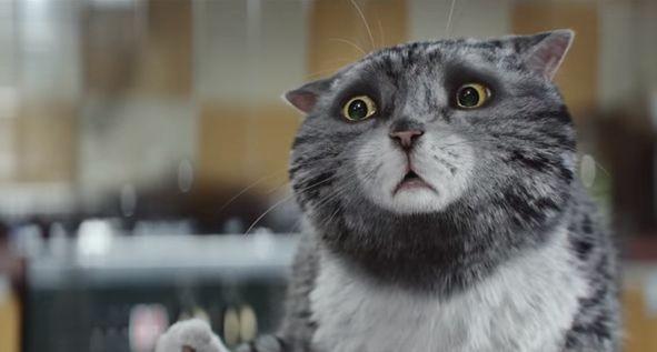 Ролик с неуклюжей кошкой Мяулей стал хитом Интернета