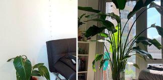3 самых распространённых способа загубить комнатные растения и как избежать их