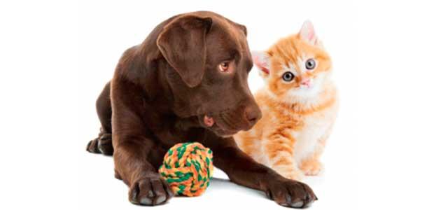 Petshop88 – Το online στέκι των απανταχού γατόφιλων και σκυλόφιλων