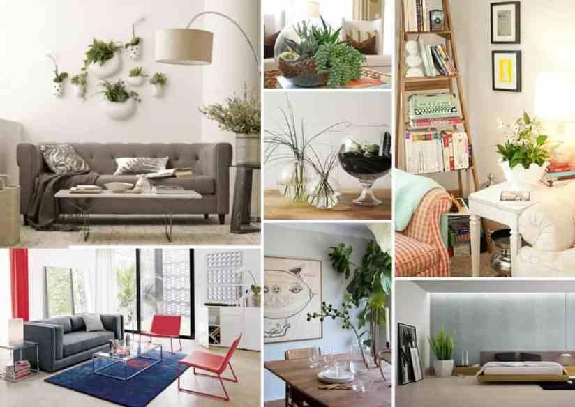 decorations-indoor-plant-decorating-terarium-plant-