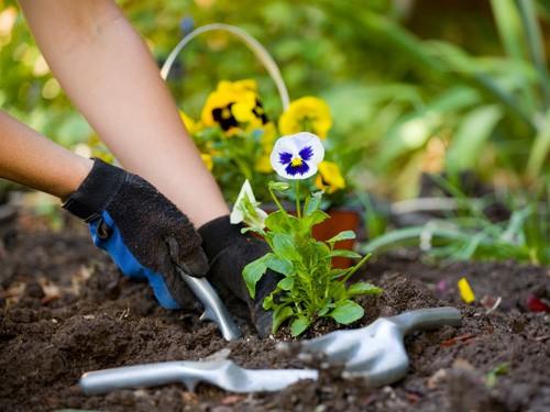 How To Create A Beautiful Winter Garden. Winter Gadening Tips