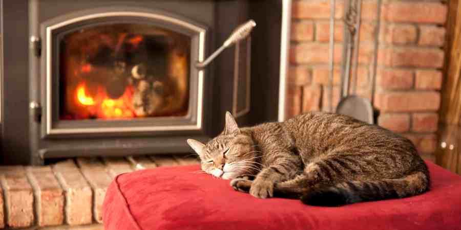 CAT-FIREPLACE- warm