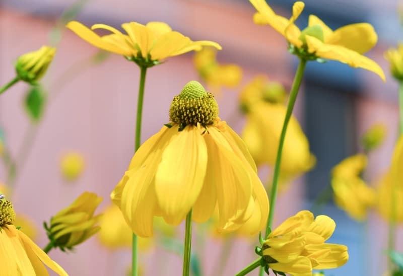 nature-flowers-summer-garden-1