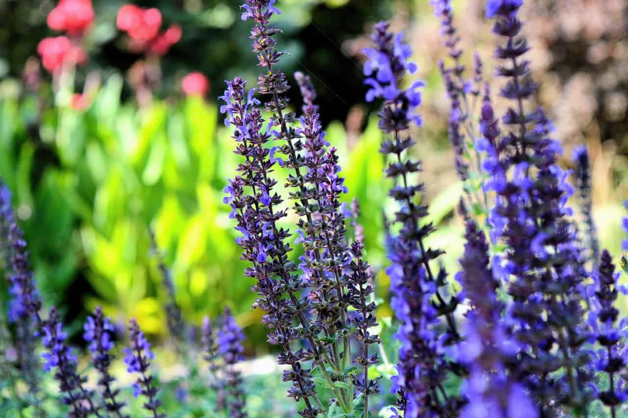 Creating A Colourful Garden This Spring