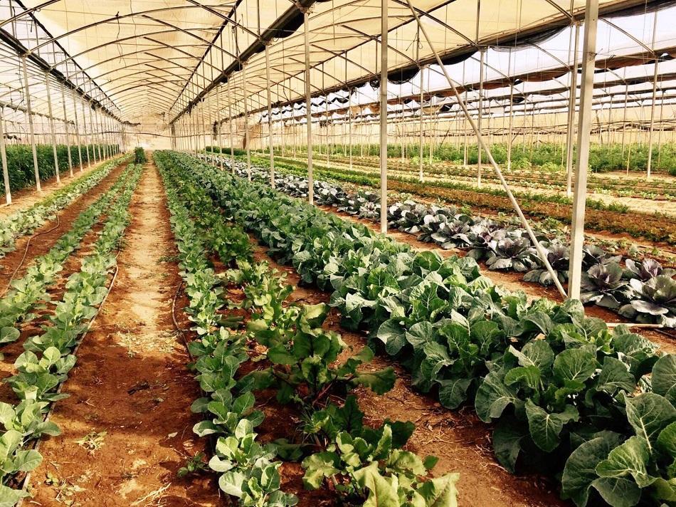 חוות בין השיטין, ערבה תיכונה