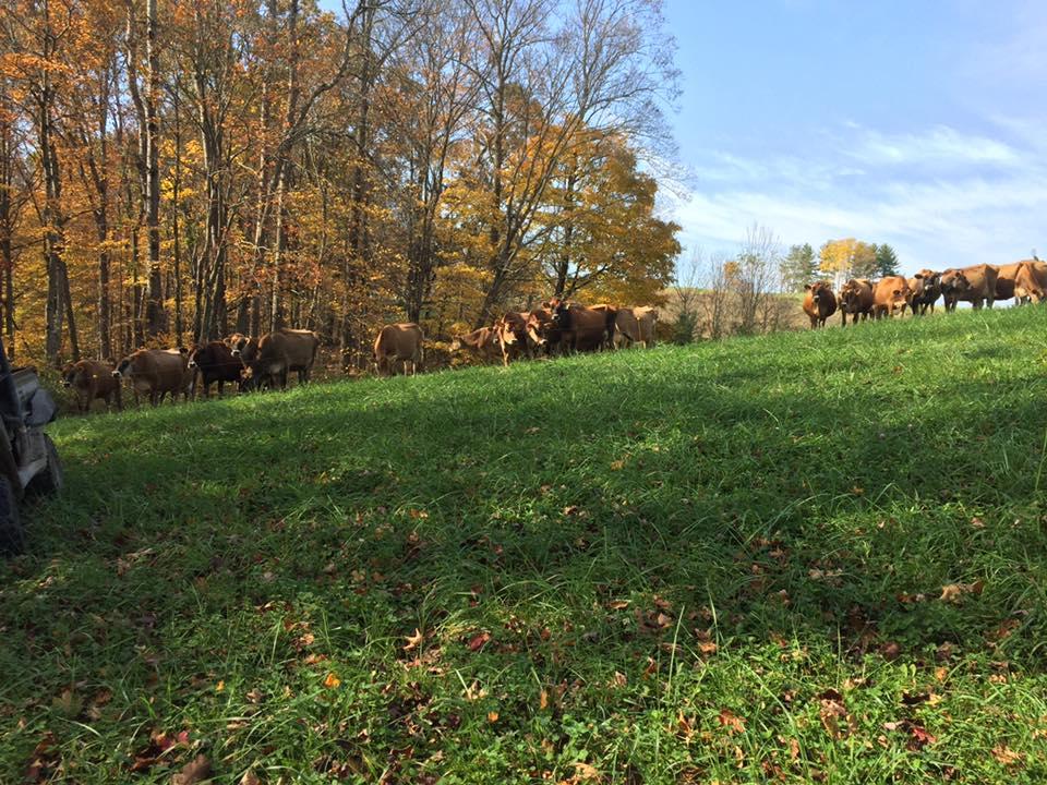 Wildcat Ridge Farms  – SE Ohio