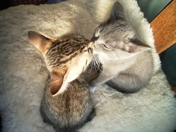Kissing Cats