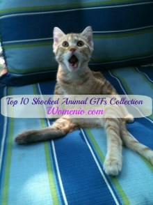Shocked animals gifs