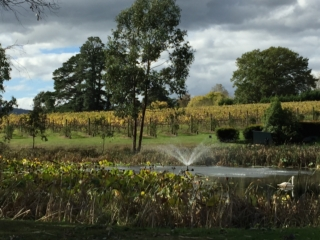Lily pond fountain