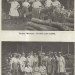 WW1 Photos: Timber Workers in Norfolk and Suffolk (1918)