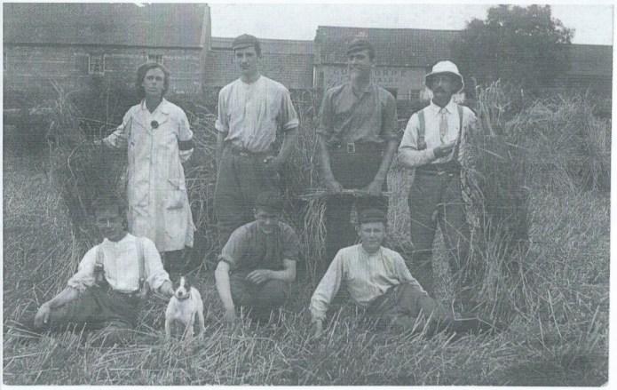 Land girl Ivy Jacklin, with farm men, harvesting at The Grange, Gunthorpe, Peterborough c1917