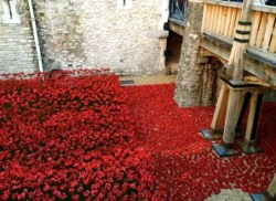 Blood Swept Lands and Seas of Red at the Tower of London. November 2014.