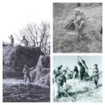 August Activity of the Month: Threshing