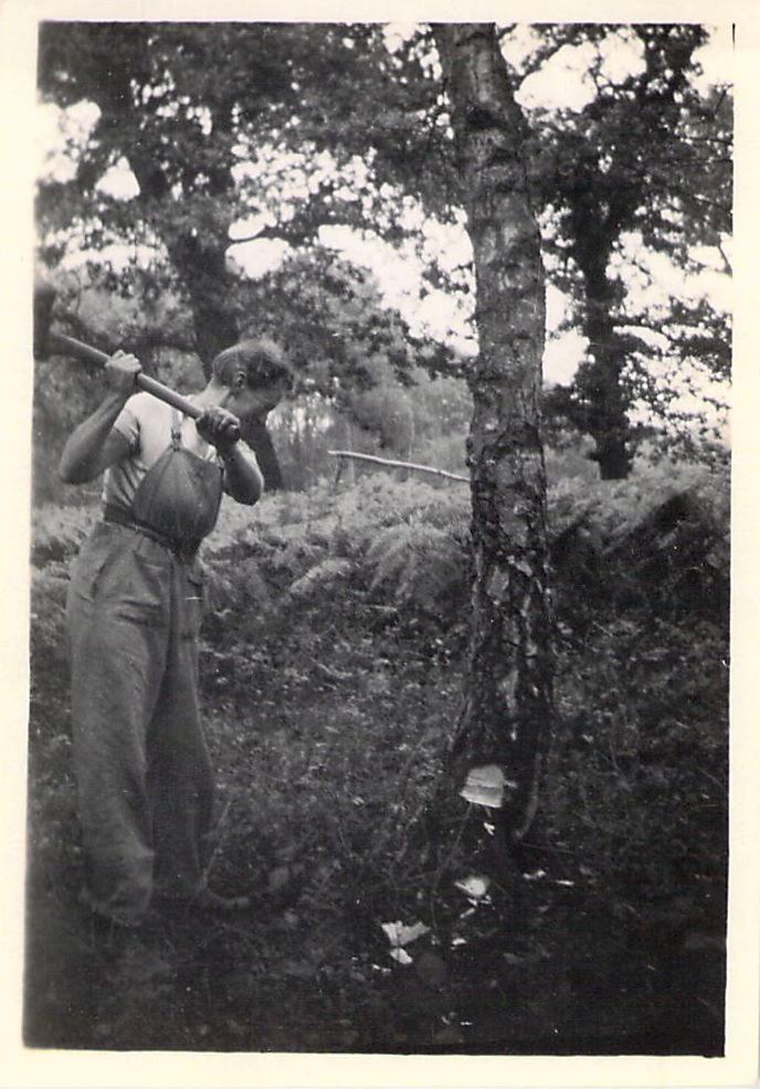 Spenny felling a tree.