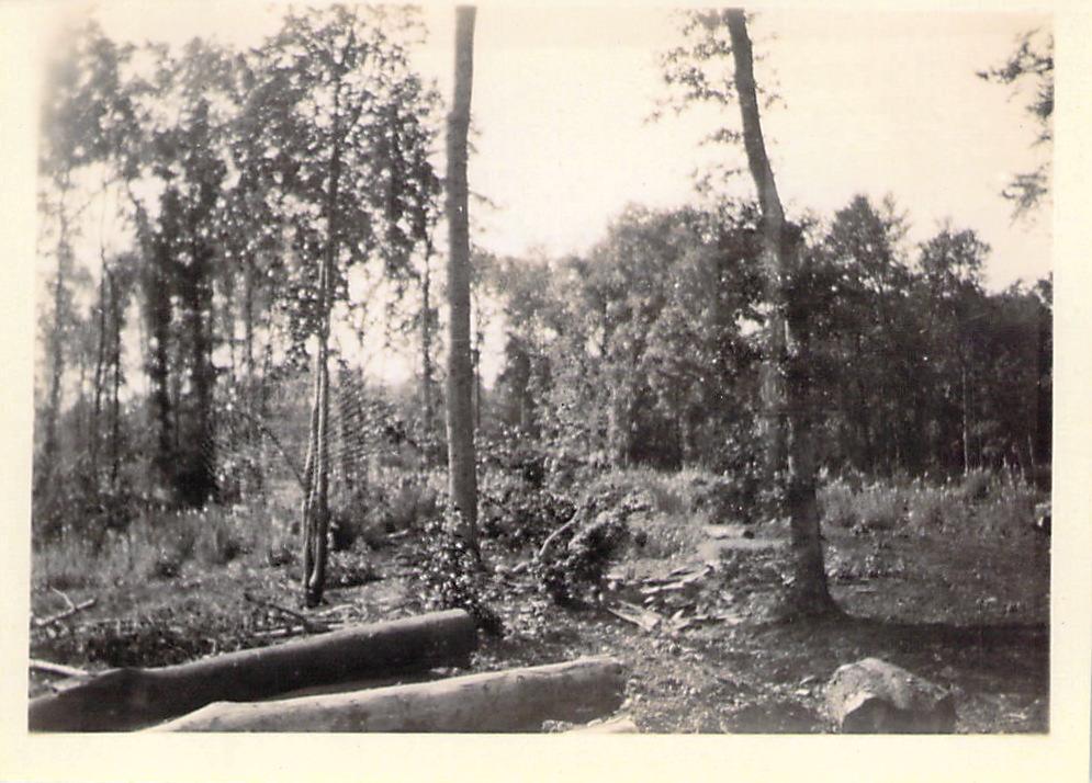 Timber yard at Haley's Mill, Cirencester.