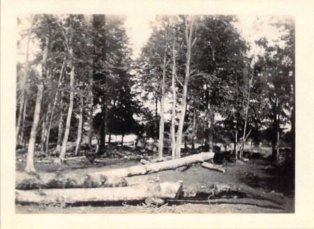 Timber yard at Cirencester